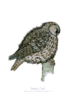 Tawny Owl - signed print